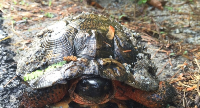 Wood turtle by Dave Anderson