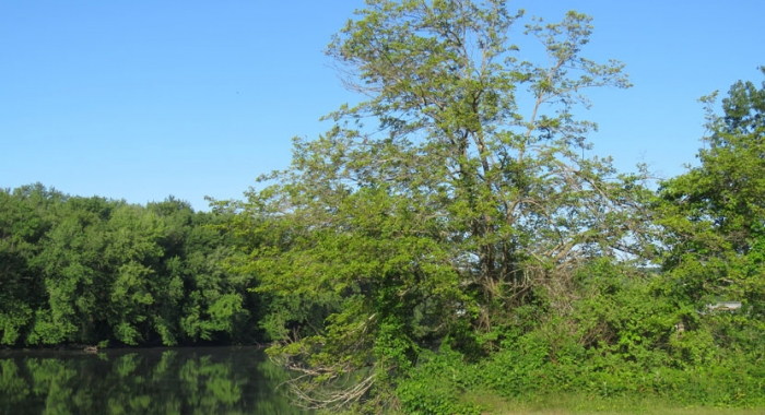 Scenes around a Mulberry Tree by floodplain photographer Ellen Kenny