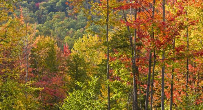 Fall foliage - hardwoods