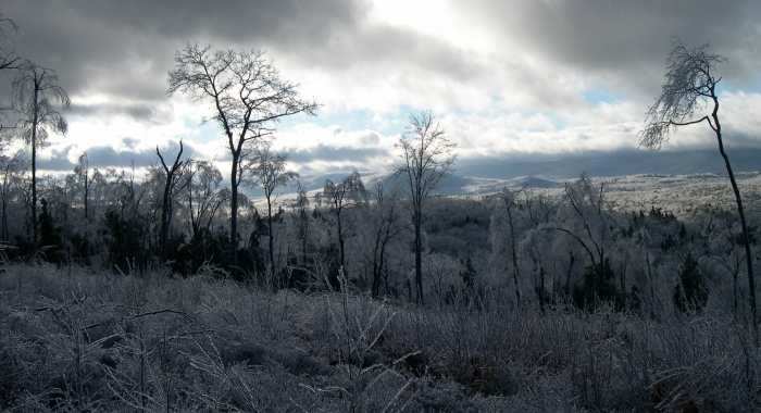 A view of Hubbard Brook forest after a winter ice storm.