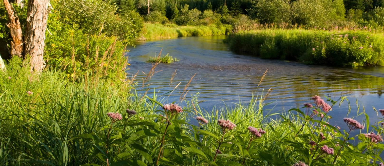 A river flows by a forest and pink wildflowers on the shore.