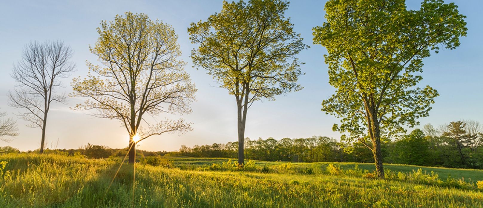 Four trees stand in the sunlight on a Forest Society conservation easement. (Photo: Jerry Monkman)