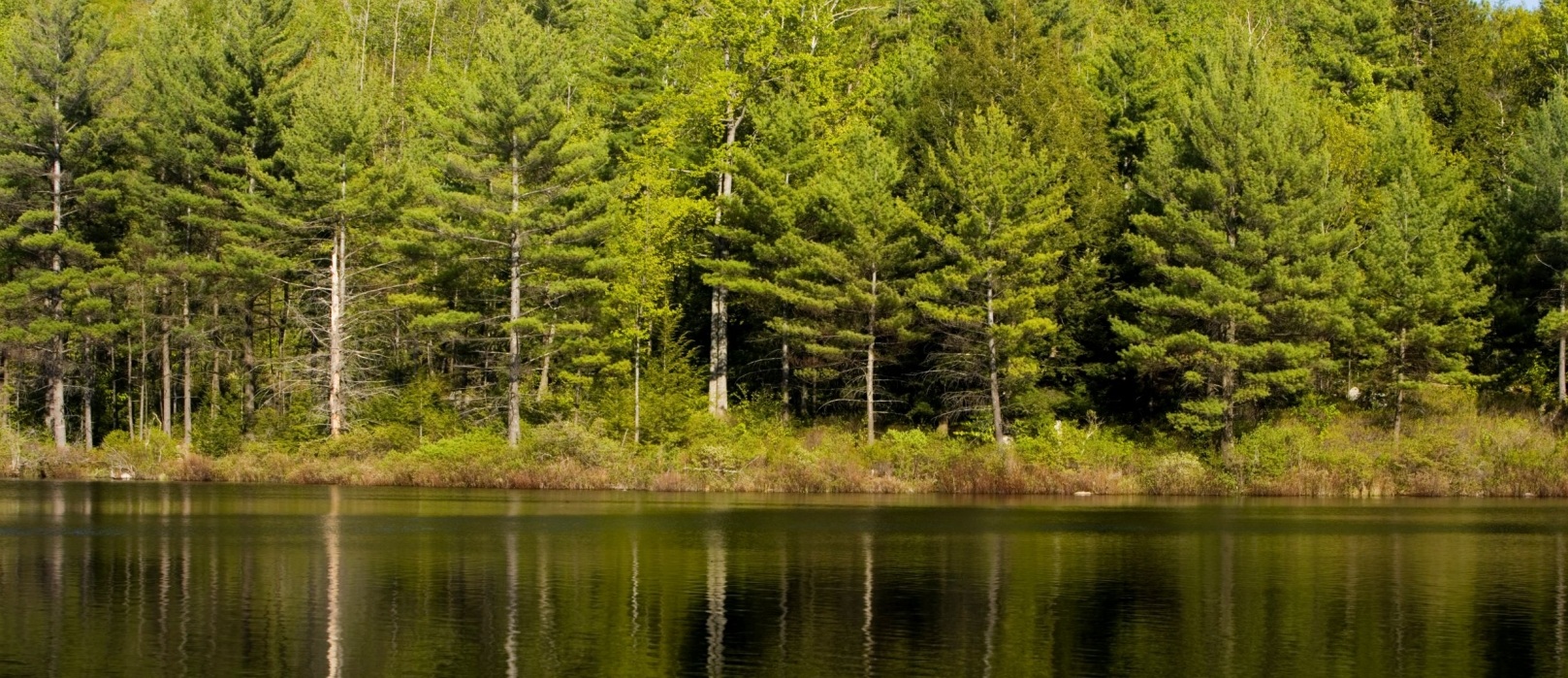 Green water reflects a stand of trees at Moose Mountains.