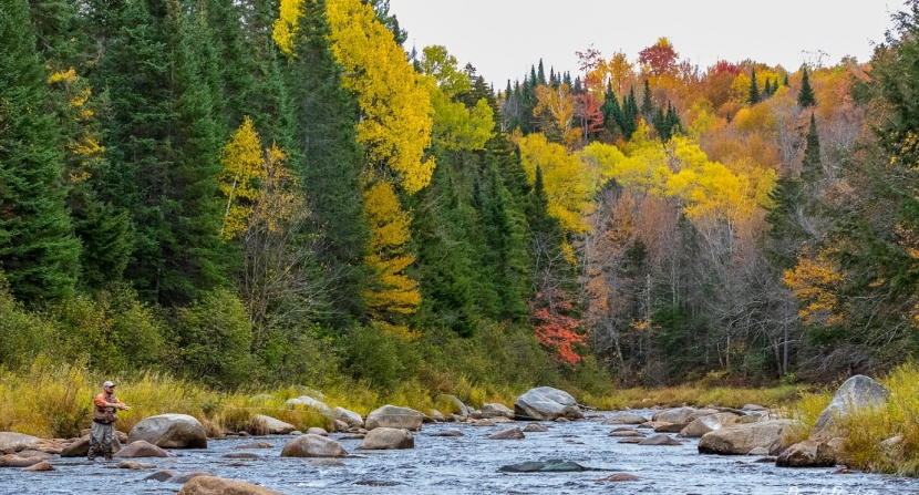 A fly fisherman casts into the Ammonoosuc River, surrounded by vivid fall foliage.