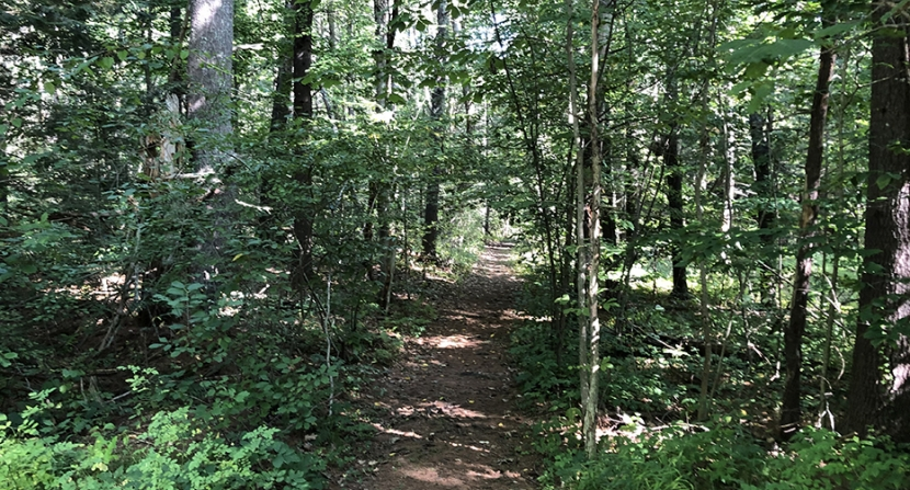 The wooded entrance to a trail at Clay Brook Forest. (Photo: Brian Hotz)