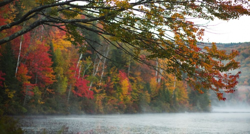 Scarlet red maples accent fall foliage above morning fog rising from Elbow Pond in the White Mountain National Forest. Photo by Emily Lord