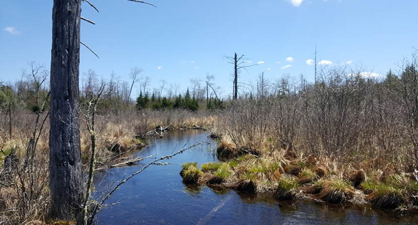 A waterview on the Nason property.