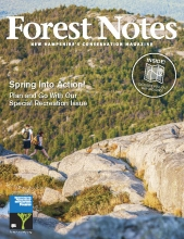 Forest Notes Spring 2019 cover