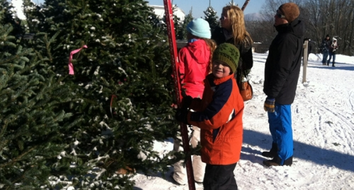 A young boy helping to measure Christmas trees at the Rocks in Bethlehem, New Hampshire
