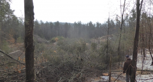 """A patch cut, five acres in size, aims to """"start fresh"""" and establish new regeneration.  Forest Society photo."""