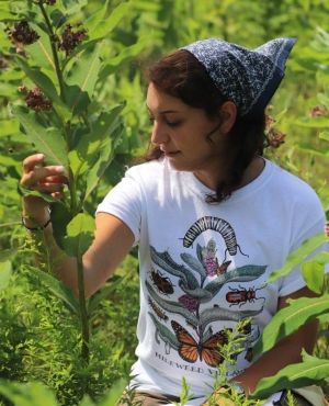 Katie Galletta inspecting the leaves of a milkweed plant.