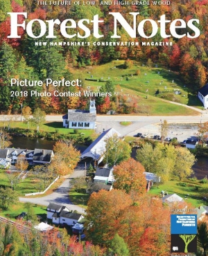 the forest notes