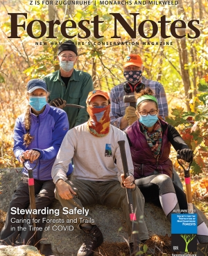 Forest Notes Fall 2020