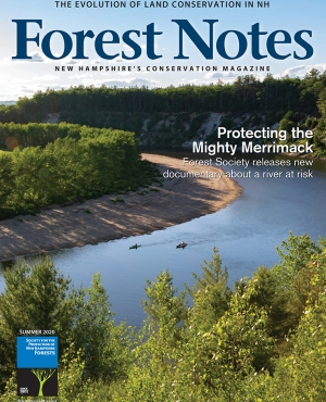 Forest Notes, Summer 2020