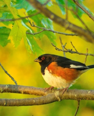 A bird perches on a thick branch.