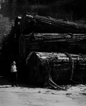 Sharon next to large redwoods that were logged.