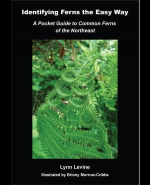 Identifying Ferns the Easy Way by Lynn Levine
