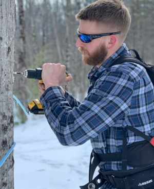 A man drills a tree to prepare to tap it for syrup.