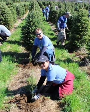 A volunteer helps plant a sapling at The Rocks Christmas tree farm.