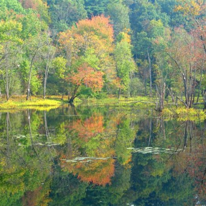 Fall foliage on the floodplain is reflected on the Merrimack River.