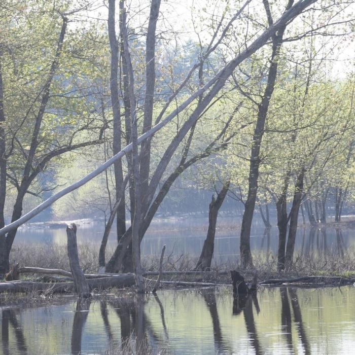 Trees overlooking the Merrimack River floodplain.
