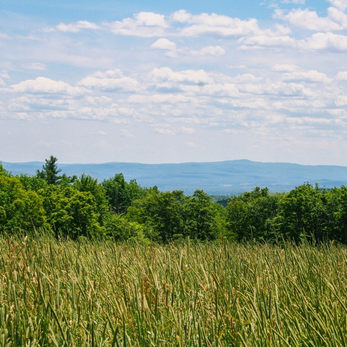Scenic outlook at High Blue Reservation in Walpole