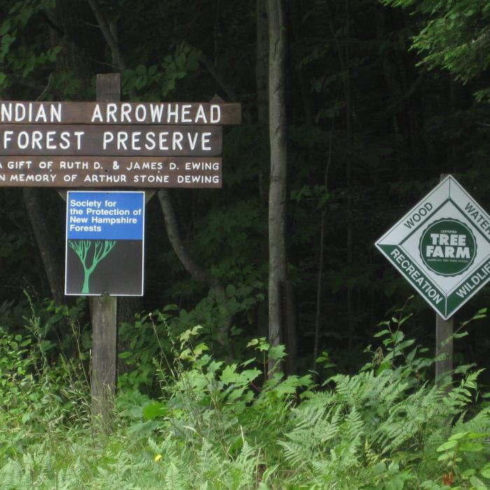 Indian Arrowhead