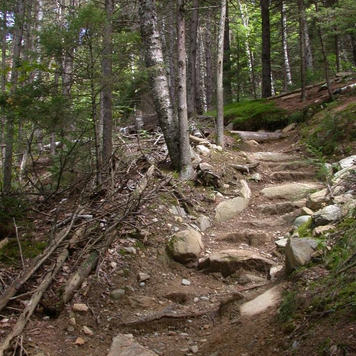 A trail through a forest.