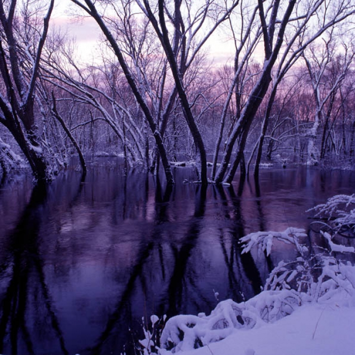 A view of McCabe Forest frosted over in the winter.