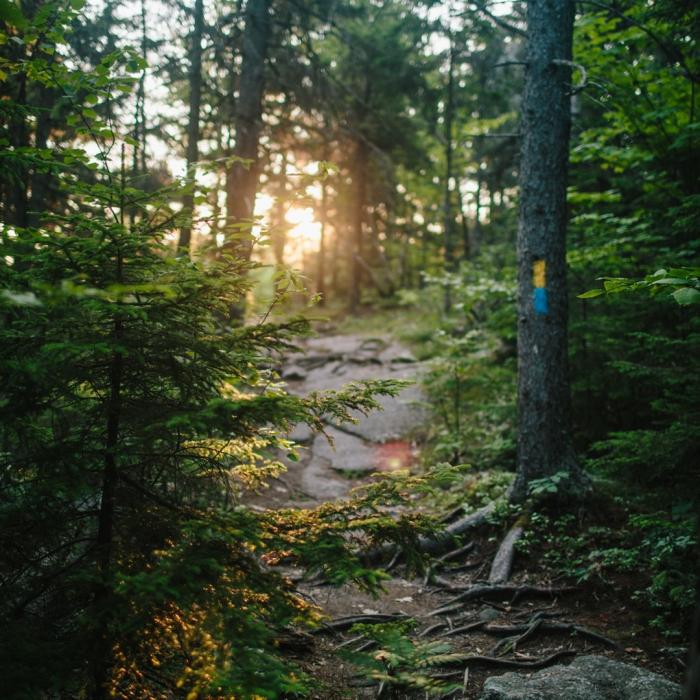 Belknap Range Trail and Brook Trail at Mount Major