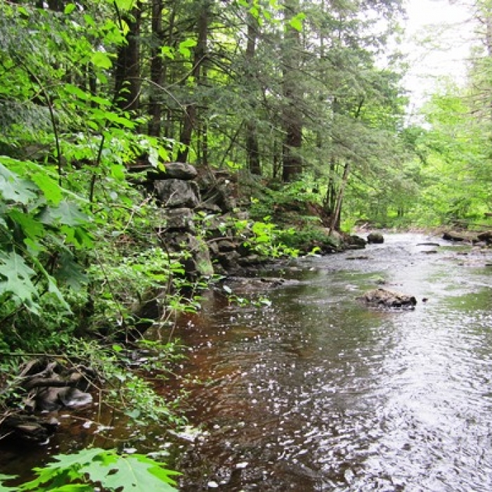 The Oyster River at Powder Major's Forest