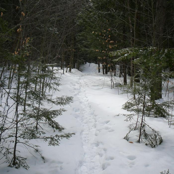Trail on Adams Forest