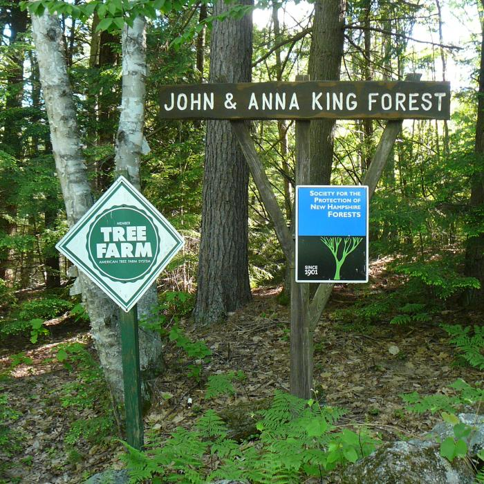 King Forest Sign