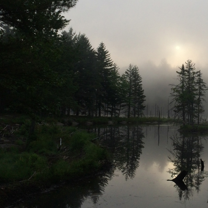 Foggy sunrise at a wetland at Rasmussen Forest