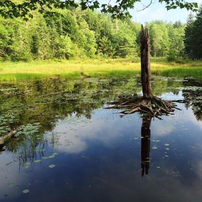 Wetland at Rasmussen Forest by Tim Kendrick