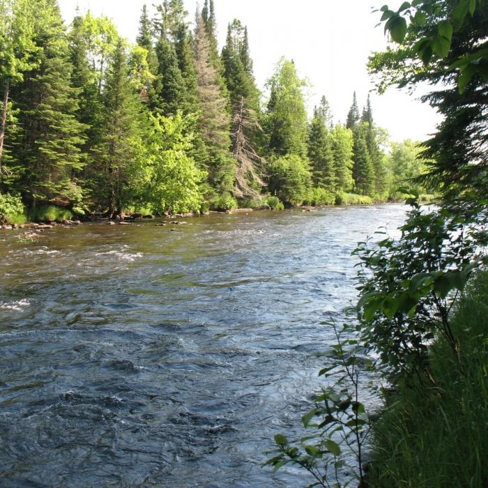 A river runs through the forest.