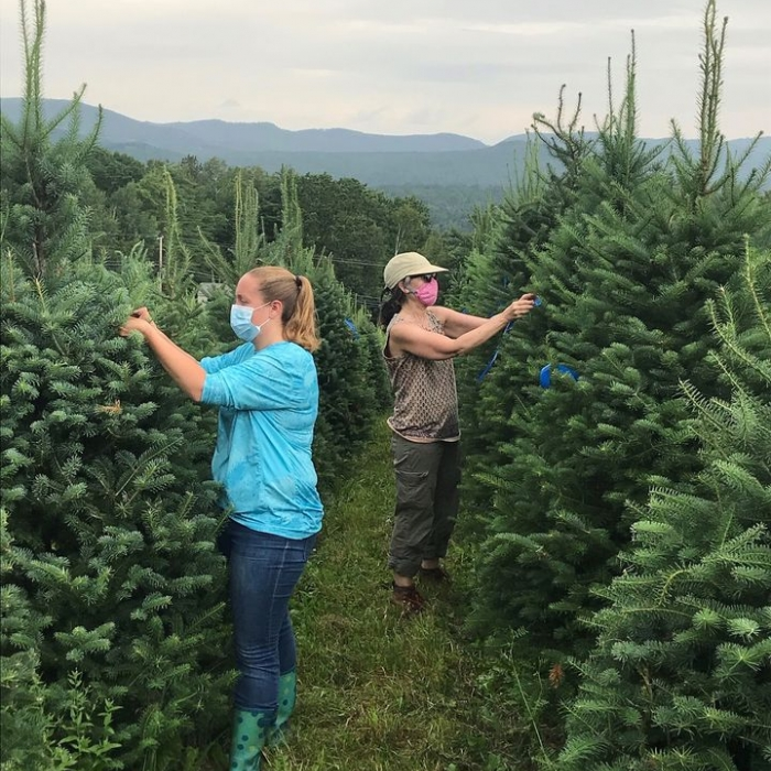 Two woman mark growing Christmas trees in the middle of an evergreen row.