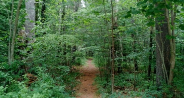 A walking trail through Clay Brook Forest.