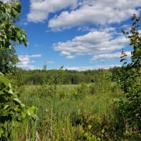A green field at Champlin Forest in springtime.