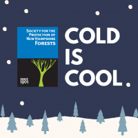 Cold is Cool logo with trees and snow graphic.